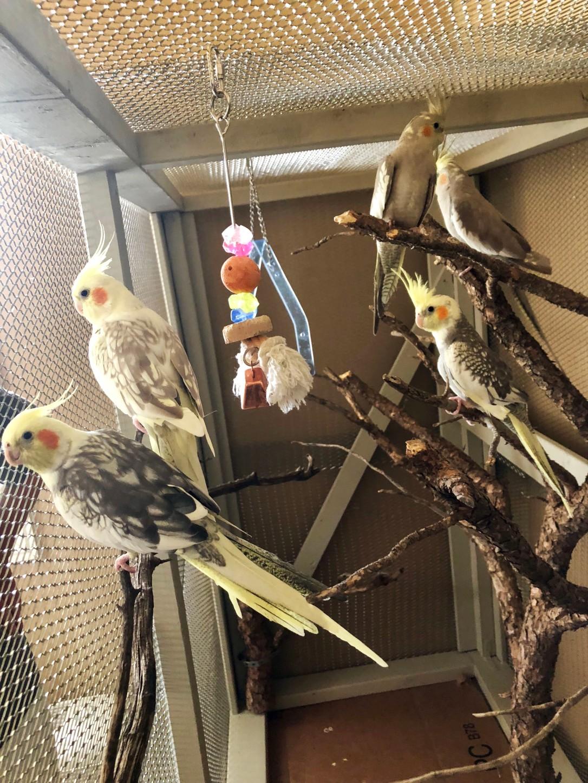 fivebabybirds